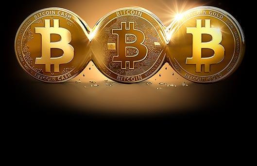 Seminole classic bitcoin casino in hollywood
